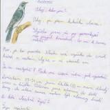 Ukázky z prací žáků: Ptáci v našem lese